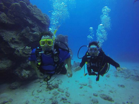 Living The Dream Divers: Perfection