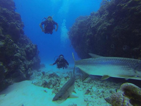 Going Down Picture Of Living The Dream Divers Seven Mile Beach TripAdvisor
