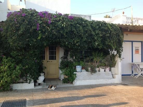 Playas de Las Acacias: A cat