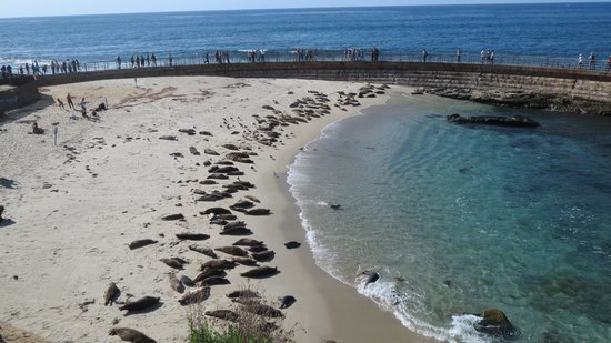 Children's Pool: Seals for days!