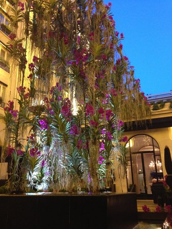 Four Seasons Hotel George V Paris : Hanging orchids above the outdoor bar