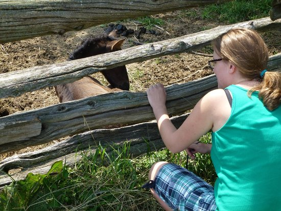 Upper Canada Village: Lots of horses, pigs and cows
