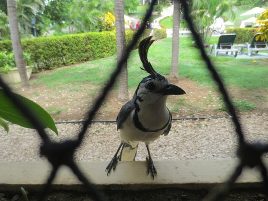 Occidental Grand Papagayo by Barcelo: Birds