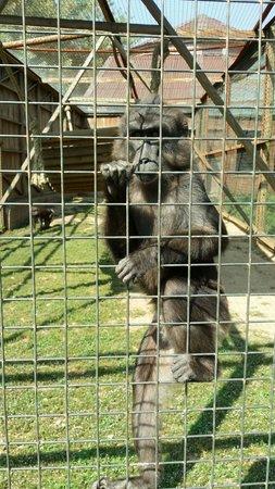 Zoo Santo Inácio : Un singe