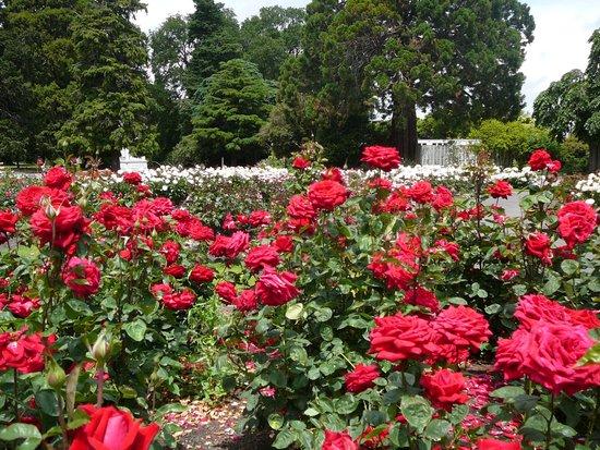 Queen Elizabeth Park : Rose Garden