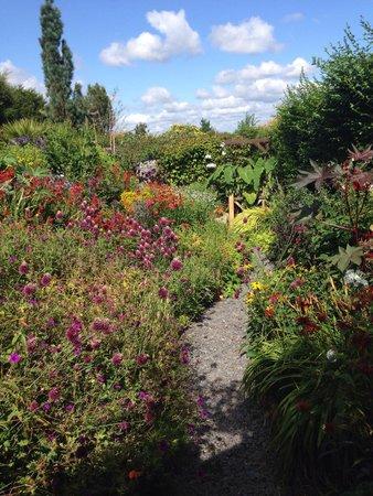 Poppy Cottage Garden: Beautiful