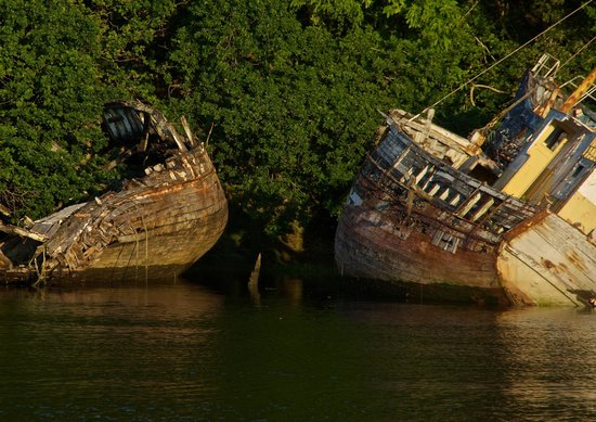 Hotel du Port Rhu : Cimetière de vieux bateaux de pêche à 1mn de l'hôtel, qui se trouve derrière les arbres