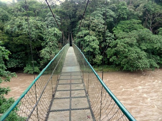 Selva Verde Lodge: pont suspendu