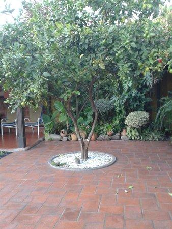 Hotel La Candela: patio