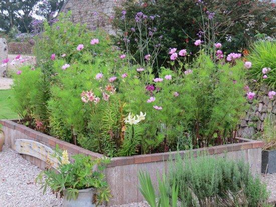 Green Pig Farm Tea Rooms: Raised bed in beautiful garden