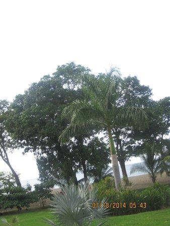 Hotel Riu Guanacaste : Monkeys in the trees