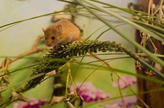 Chestnut Centre Otter, Owl and Wildlife Park: Harvest mouse