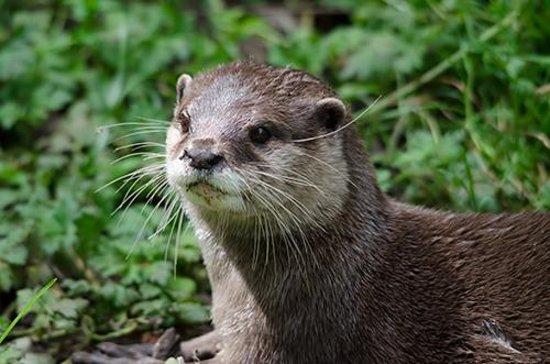Chestnut Centre Otter, Owl and Wildlife Park: Otter