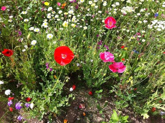 Field of Dreams: Flowers