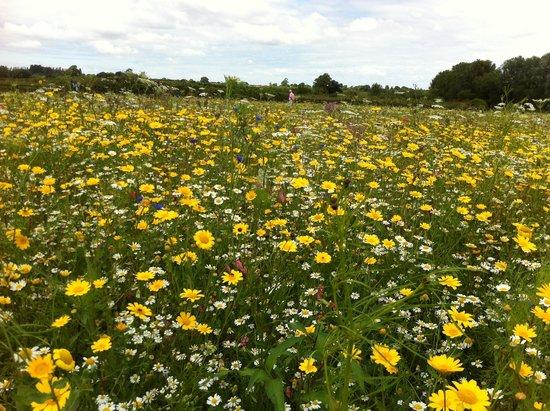 Field of Dreams: Field