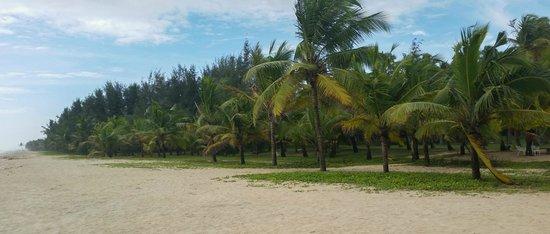 Marari Beach Resort: Beach