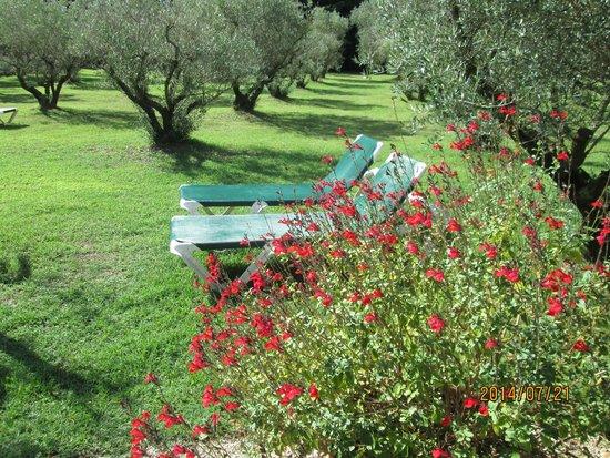 Hotel du Moulin d'Aure : jardin d'oliviers