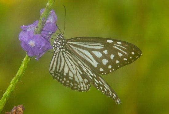 Marari Beach Resort: Butterfly Garden