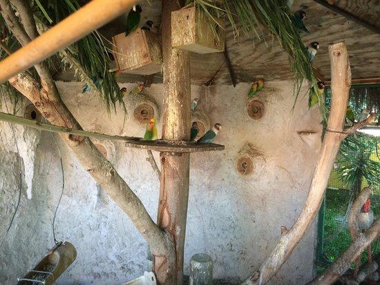 Hotel Dos Mares: Jaula de inseparables