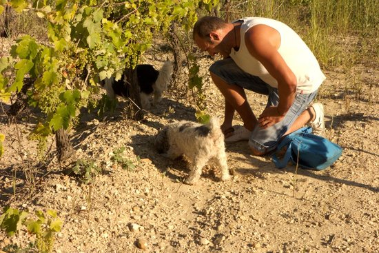 Truffle Hunting at Les Pastras : The truffle hunter and the truffle-hunting dogs. Super impressed!