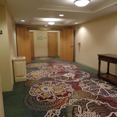Hilton Daytona Beach Oceanfront Resort : Hallway