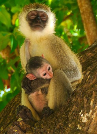 The Baobab - Baobab Beach Resort & Spa: Mum and baby, view from our sun lounger
