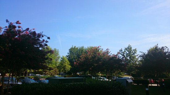 Holiday Inn Express & Suites: Trees around the hotel