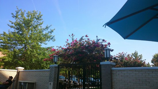Holiday Inn Express & Suites : View from the pool