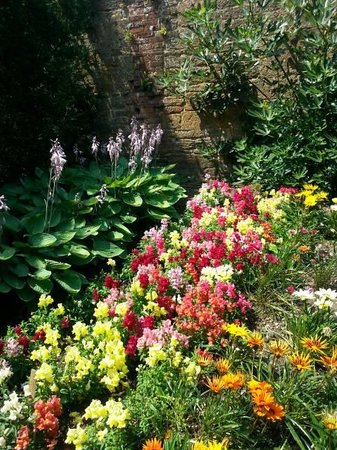 Montacute House: Colourful flowers
