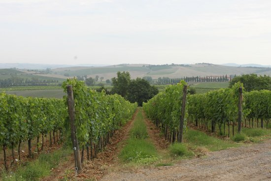 Tuscan Trails: Beautiful fields outside the winery