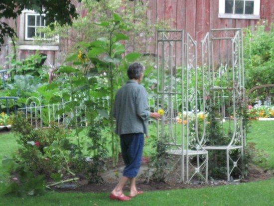 Maple House Bed & Breakfast: Karen checks out the Rose Garden