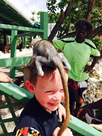 Mango Bay All Inclusive: Monkey around