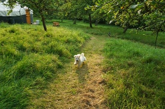 The Orchard Retreat: happy dog outside the Yurt's area