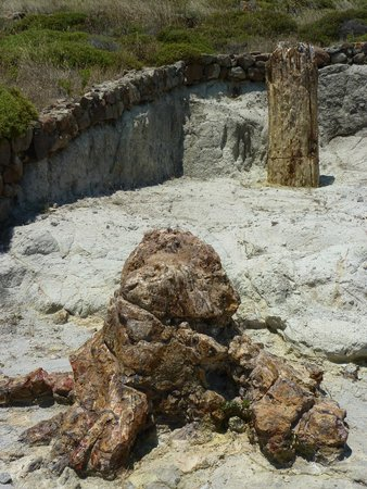 Petrified Forest of Lesbos: Another petrified tree trunk