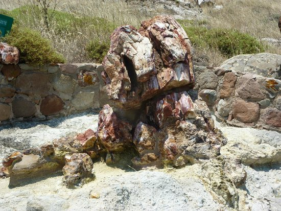 Petrified Forest of Lesbos: Goodness ... another one!