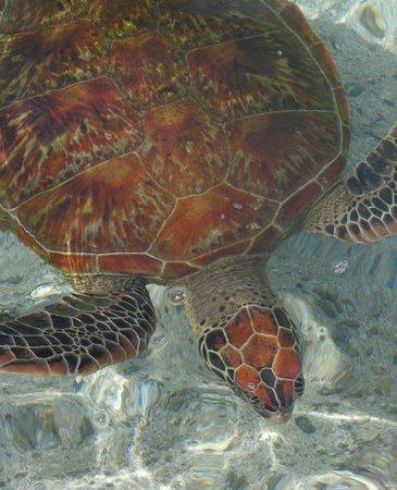 Tortoise at Lagoonarium