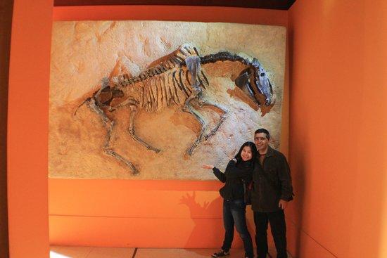 Museo Argentino de Ciencias Naturales Bernardino Rivadavia: fauna prehistorica de buenos aires