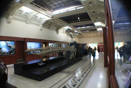 Museo Argentino de Ciencias Naturales Bernardino Rivadavia: fauna marina argentina