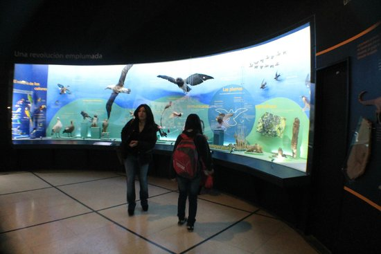 Museo Argentino de Ciencias Naturales Bernardino Rivadavia: exhibiciones de aves