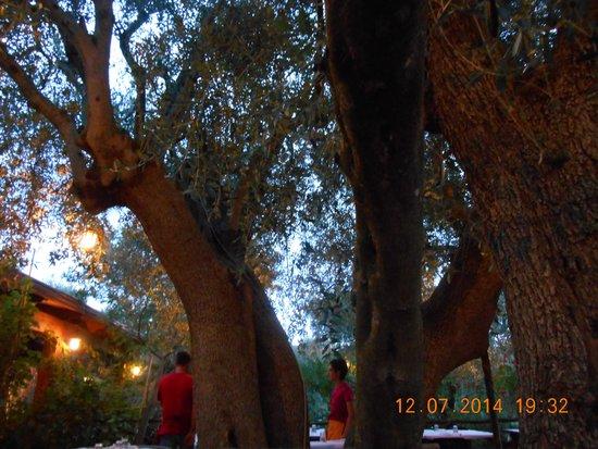 Agriturismo Osteria Pane e vino: ulivi