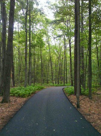The Lodge at Woodloch: Walk in the woods