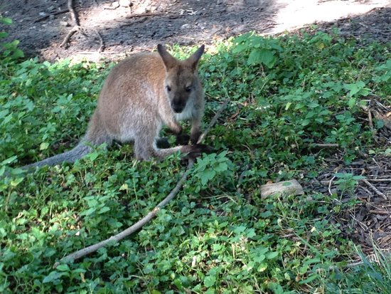 Blank Park Zoo: Free to roam!
