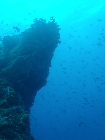 Osa Divers: Great View