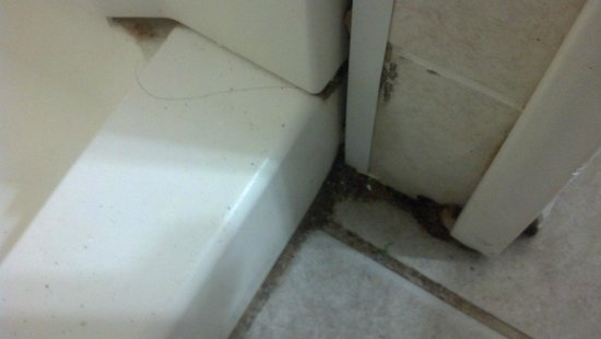 Desert Palm Inn: Filth in the corner of the bathroom