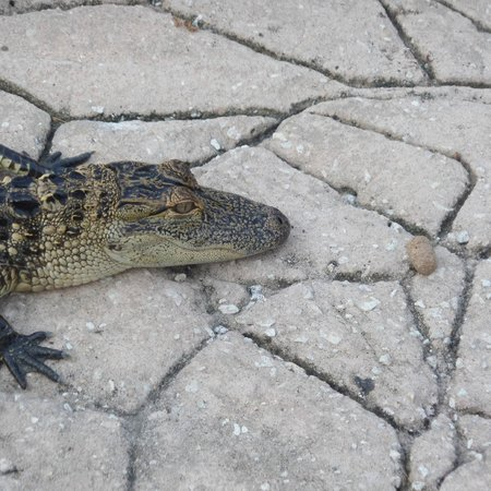 Kissimmee Go-Karts: Feeding the gators