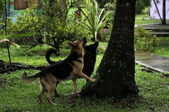Cabinas Caribe Luna: Luna and Negra irritated by a squirrel