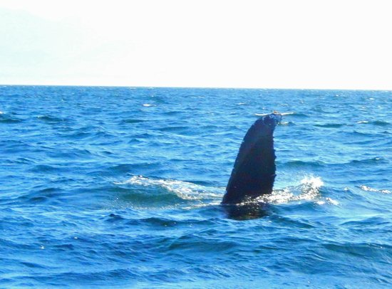 BC Whale Tours: Whale waving to us
