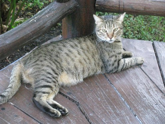 Iberostar Cozumel: Cats on the grounds, friendly