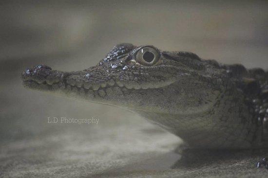 Crocodile Park: The babie