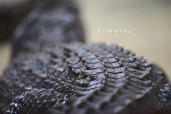 Crocodile Park: Detail